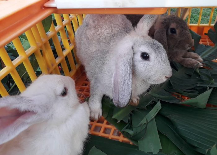 Rabbit production training