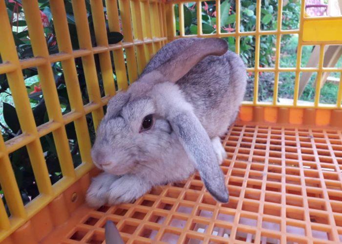 Rabbit production training6